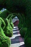 O parque surpreendente dos pinheiros Foto de Stock