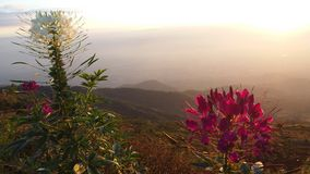 O parque tem boas flores bonitas imagem de stock royalty free