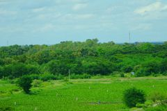 O parque verde na cidade Tailândia de Khon Kaen Imagem de Stock Royalty Free