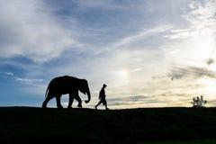 O passeio do elefante do bebê da silhueta segue um homem Fotografia de Stock Royalty Free