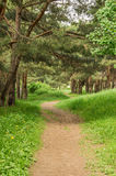 O passeio na floresta Foto de Stock Royalty Free