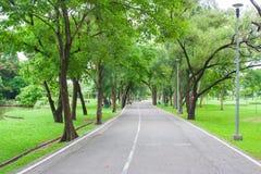 O passeio vazio ou a passagem da vista tropical ao longo do lado com árvores verdes estacionam em público imagem de stock royalty free
