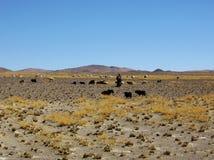 O pastor e seus carneiros Foto de Stock