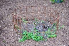 O pato choca seu ovo no ninho Fotos de Stock Royalty Free