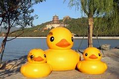 O pato do amarelo do palácio de verão Foto de Stock