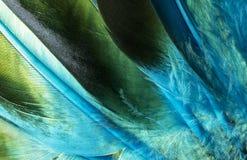 O pato indiano do nativo americano empluma-se o detalhe Imagem de Stock Royalty Free