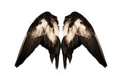 O pato real grampeado voa o fundo branco no anjo traseiro isolado dois pares foto de stock