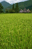 O património mundial Shirakawa-vai. Fotografia de Stock Royalty Free