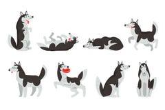 O pavimento do caráter do cão de puxar trenós Siberian, cão em ações diferentes vector ilustrações em um fundo branco ilustração do vetor