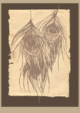 O pavão do estilo velho empluma-se o cartão Foto de Stock