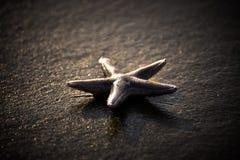 O peixe da estrela é uma criatura do som do oceano Imagens de Stock Royalty Free