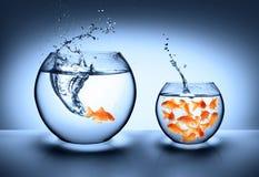 O peixe dourado que salta - conceito da melhoria Fotografia de Stock Royalty Free