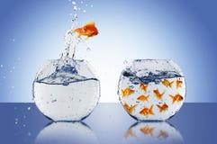 O peixe dourado salta Fotos de Stock Royalty Free