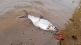 O peixe está flutuando pela costa vídeos de arquivo