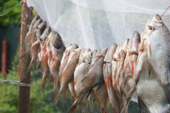 O peixe pendura em uma corda Imagens de Stock