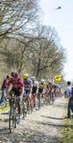 O Peloton na floresta de Arenberg- Paris Roubaix 2015 Foto de Stock Royalty Free