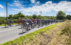 O Peloton - Tour de France 2016 Foto de Stock