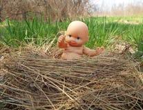 O pequeno no ninho Foto de Stock