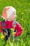 O pequeno no prado considera o dente-de-leão fotografia de stock
