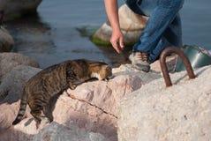 O pescador alimenta ao gato um peixe Fotos de Stock