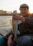 O pescador está mostrando um walleye Fotografia de Stock Royalty Free