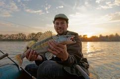 O pescador está mostrando um walleye Imagem de Stock