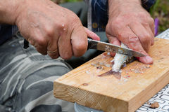 O pescador limpa um timalo travado fresco da faca imagens de stock