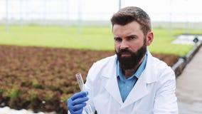 O pesquisador masculino guarda um tubo de vidro com uma posição da água da amostra antes das plantas na estufa Coordenador agríco video estoque