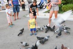 O pessoa alimenta pombos Imagens de Stock Royalty Free