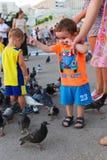 O pessoa alimenta pombos Fotos de Stock
