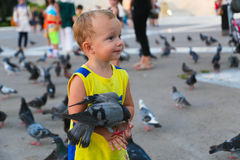 O pessoa alimenta pombos Imagem de Stock Royalty Free