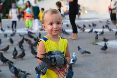 O pessoa alimenta pombos Imagem de Stock