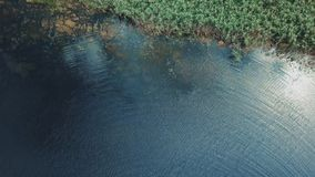 O pessoa que nada no lago toma seu helicóptero vídeos de arquivo