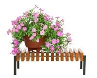 O petúnia cor-de-rosa floresce no vaso de flores no banco de madeira isolado no wh Imagem de Stock Royalty Free