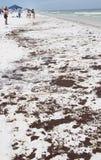 O petróleo lava em terra na praia de Pensacola Fotografia de Stock