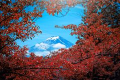 O pico de Butte com crista e de árvores do Mt Fuji entre a nuvem com a folha vermelha no th foto de stock