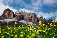 O pico de Passo Pordoi e a flora larga com profundidade do efeito de campo fotografia de stock