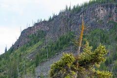 O pinheiro grande e alto imagem de stock royalty free