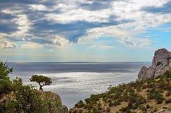 O pinheiro sobre um penhasco contra o mar Fotografia de Stock