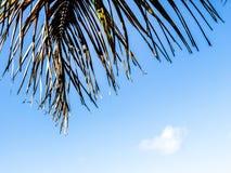 O pinho do verde do pinho na praia Imagem de Stock Royalty Free