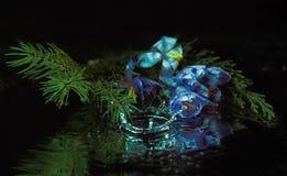 O pinho floresce a gota da água Fotos de Stock Royalty Free