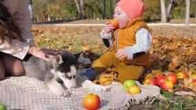 O piquenique da família, menino pequeno morde uma maçã em um parque do outono ao lado de um cão e o mum tem o bom tempo no fundo  video estoque
