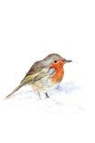 O pisco de peito vermelho ilustração stock