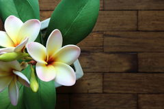 O plumeria artificial floresce no potenciômetro na tabela de madeira, vista superior Fotos de Stock Royalty Free