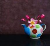 O plumeria bonito ou o frangipani da flor na fantasia cozeram o teap da argila Imagens de Stock