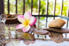 O Plumeria ou o frangipani decorado na água e no seixo balançam no zen Imagens de Stock