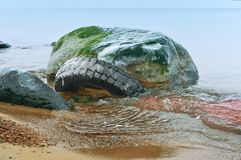 O pneu na água entre as pedras, pneu de carro polui o mar Fotografia de Stock Royalty Free