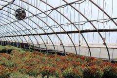 O poço importou-se com plantas dentro do berçário local Imagem de Stock