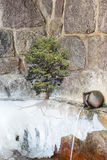 O poder da natureza sobreviver Foto de Stock Royalty Free