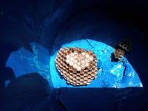 O polistov das vespas do ninho Vespiary foto de stock